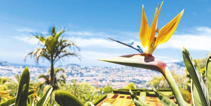 Ekskursijos Madeiroje